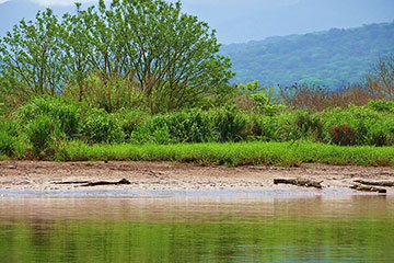 safari_crocodile_tarcoles3-3.jpg